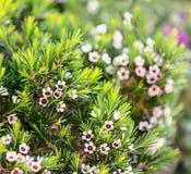 De mooie Bloemen in een bloemserre royalty-vrije stock fotografie