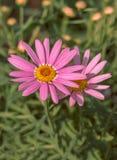 De mooie Bloemen in een bloemserre stock afbeelding