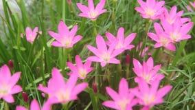 De mooie bloemen in het park stock videobeelden