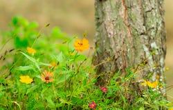 De mooie bloemen in het tuinlandbouwbedrijf bewerken huis royalty-vrije stock afbeelding