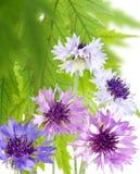 De mooie bloemen in de tuin sluiten omhoog Royalty-vrije Stock Foto