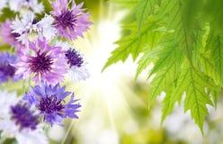 De mooie bloemen in de tuin sluiten omhoog Stock Fotografie