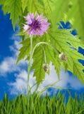 De mooie bloemen in de tuin sluiten omhoog Royalty-vrije Stock Foto's