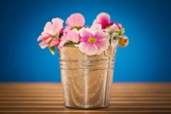 De bloemen van de begonia Royalty-vrije Stock Fotografie