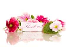 De bloemen van de begonia Royalty-vrije Stock Afbeelding
