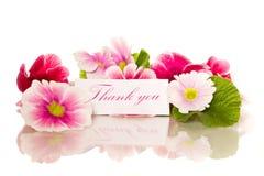 De bloemen van de begonia Royalty-vrije Stock Foto's
