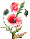 De mooie bloemen van de Papaver Stock Fotografie