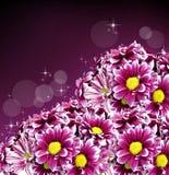 De mooie bloemen van het de lentemadeliefje Stock Afbeelding