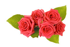 De mooie bloemen van Rozen Royalty-vrije Stock Afbeeldingen