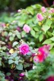 De mooie Bloemen van de Tuin Royalty-vrije Stock Fotografie