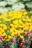 De mooie Bloemen van de Tuin Royalty-vrije Stock Afbeeldingen