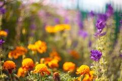 De mooie Bloemen van de Tuin Stock Afbeelding