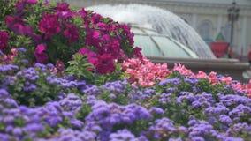 De mooie bloemen versieren de straten van de stad Mooie fontein in de streek van geen scherpte, opzettelijk Samenvatting stock videobeelden