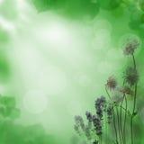 De mooie bloemenzomer backgroung Stock Afbeelding