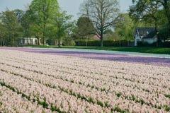 De mooie bloesem van kleurenbloemen in een landbouwbedrijf royalty-vrije stock foto