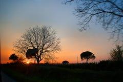 De mooie bomen begroeten de het toenemen zon Stock Afbeeldingen