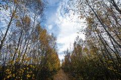 De mooie bomen van de herfstbladeren met fijne kunst zien eruit de kleurrijke zachte achtergrond van het de herfstlandschap Seizo stock foto's