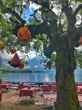 De mooie boom met mooie mening in het verbazen van Oostenrijk stock fotografie