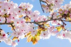 De mooie boom van de de zomerbloesem royalty-vrije stock foto