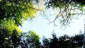 De mooie bossen van Thuringia stock foto's
