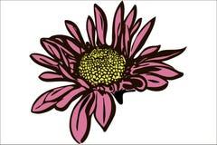 De mooie chrysant van de de herfstbloem Royalty-vrije Stock Afbeelding