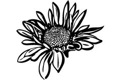 De mooie chrysant van de de herfstbloem Stock Afbeeldingen
