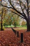 De mooie daling van een park van Londen met shedded bladeren stock afbeeldingen
