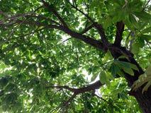 De mooie die bladeren met het zonlicht worden uitgespreid die neer tussen de bladeren als natuurlijke achtergrond glanzen royalty-vrije stock fotografie