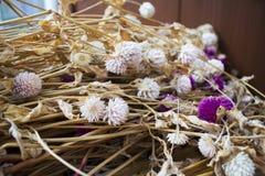 De mooie droge bundel van de bolamarant in de tuin Stock Foto