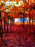 De mooie drukken van de van achtergrond wijnbomen behang fijne kunst royalty-vrije stock fotografie