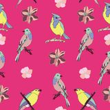 De mooie en kleurrijke vector van het vogels naadloze patroon Royalty-vrije Stock Foto
