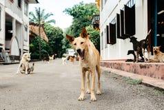 De mooie en vriendelijke honden zitten dichtbij het huis royalty-vrije stock afbeeldingen