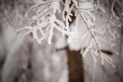 De mooie foto van het de winterdetail die in bergen wordt genomen Stock Foto's