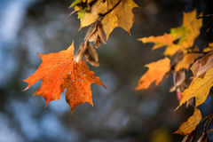 De mooie geeloranje rode achtergrond van de herfstbladeren Royalty-vrije Stock Afbeeldingen