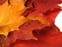 De mooie gekleurde dalingsbladeren met water daalt Stock Fotografie