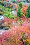 de mooie gele de herfstkleur van Japan mapleleaves op boom, Stock Fotografie