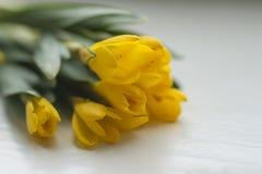 De mooie Gele Lente bloeit Krokus Royalty-vrije Stock Afbeeldingen