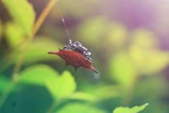 De mooie geschilde spin maakt een nest Stock Afbeeldingen