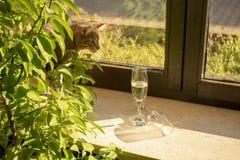 De mooie gestreepte kat binnenlandse kat kijkt nieuwsgierig royalty-vrije stock afbeelding
