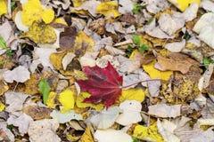 De mooie gevallen achtergrond van de herfstbladeren Stock Foto