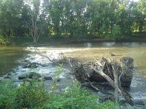 De mooie gezichten op de stijging van een aard langs de rivier Stock Foto