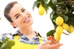 De mooie glimlachende vrouw oogst een citroen van boom Stock Foto