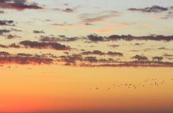 De mooie gouden bewolkte hemel van het Zonsonderganglandschap en vliegende vogels stock foto