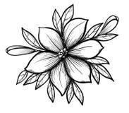 De mooie grafische tak van de tekeningslelie met bladeren en knoppen van de bloemen. Stock Fotografie