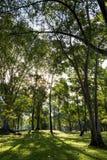 De mooie groene achtergrond van de bosboomaard in de tuin met heldere zonneschijnochtend die royalty-vrije stock foto