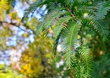 De mooie groene bladeren worden voorgesteld in de vorm van een natuurlijk patroon stock foto's