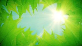 De mooie groene boombladeren openbaart het licht van de zon stock video