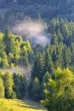 De Mooie groene pijnboombomen op Karpatische bergen Stock Afbeelding