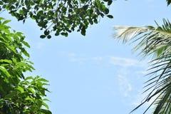De mooie hemel met boom verlaat grens Royalty-vrije Stock Foto
