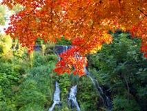 De mooie herfst Royalty-vrije Stock Foto